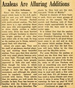 Azaleas March 1925 1