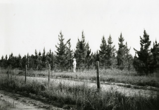 Reforestation 1955