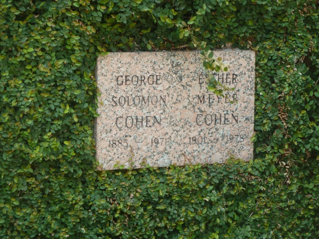 Cohen plaque closeup