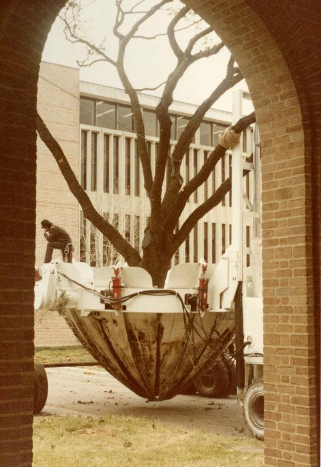 tree-moving-1983-1-040