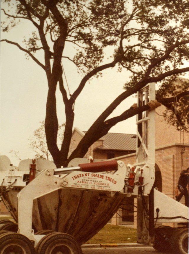 tree-moving-1983-2-041