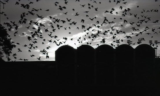 birds-at-dusk-3-163