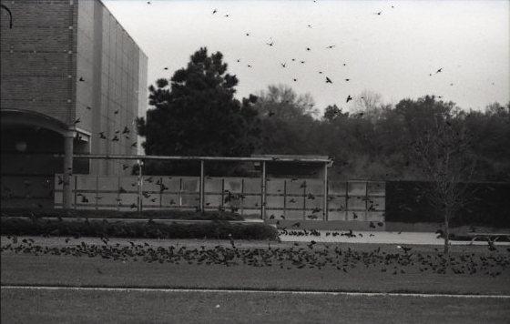 birds-at-dusk-4-164